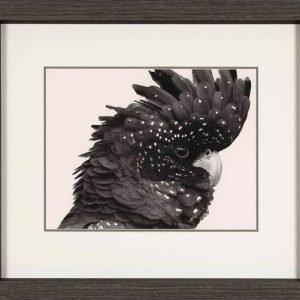 Black Cockatoo – Contemporary Art Print